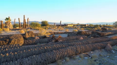 Motion Control Dolly Shot of Dead Palm Trees in Desert -Dolly Right / Pan Left- Stock Footage
