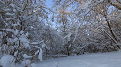 Beautiful snow covered trees in winter park. Horizontal panorama Stock Footage