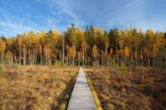 Wooden path way pathway from marsh to forest. Autumn - stock photo