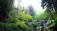 Lush green magical forest garden, Quinta da Regaleira, Sintra, Portugal - stock footage