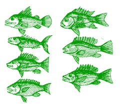 Fish in  Illustration Stock Illustration