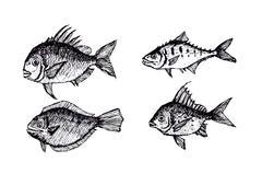 fish in  Illustration - stock illustration