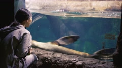 Young woman observing seals in oceanarium Stock Footage
