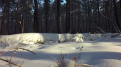 Snow drifts covered the sun in winter mixed forest Stock Footage