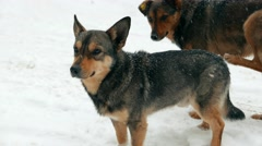Homeless stray dogs in the snowy street. Snow, snowfall, snowstorm - stock footage