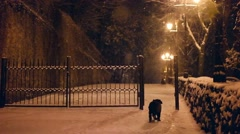 Dog running at snowy night in slow motion Stock Footage