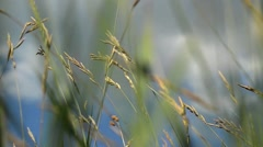 Dried herbs, spice, wheat, grass in the wind. The wind blows hard 5 - stock footage
