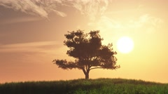 4K Lonely Tree on Summer Field in the Sunset Sunrise 4 Stock Footage