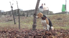 Brown dog was tied to a tree in the park by his master. Now the dog sit quiet 3 Stock Footage