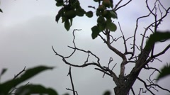 Dark sky was filled with dark clouds, the wind blows hard. Dry bare branches  Stock Footage