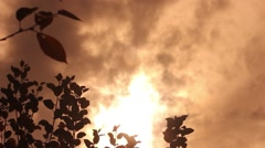 White smoke that rises into the sky, coming from a fire devours dry vegetation 1 Stock Footage