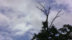 Dark sky was filled with dark clouds, the wind blows hard. Dry bare branches 8 Stock Footage
