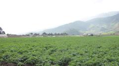 Pan Across Panama Farms - stock footage