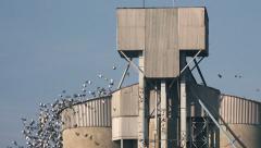 Flock of birds flying around grain silos building Stock Footage