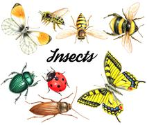 set of traditional colored pencil insects - stock illustration