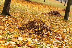 autumn trees . Belarus - stock photo