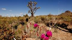 Beautiful vegetation in Arizona desert in 4k. Stock Footage