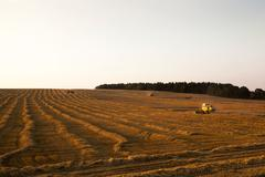Cereal harvest. Sunset Stock Photos