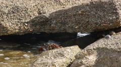 Crab crawling on the beach, hiding under stones Stock Footage