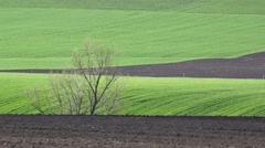 Spring fresh green field and plowed fertile soil Stock Footage