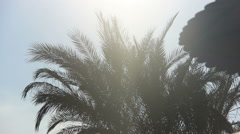 under the umbrella looking at the palm of the sun's rays and clouds background - stock footage