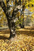 Autumn season  forest Stock Photos