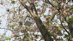 Birdhouse Cherry Blossoms Wide - 4k - stock footage