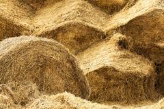 Crop of cereals Stock Photos