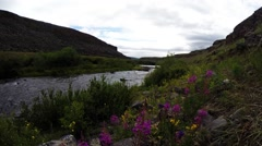 bright flowers on the banks of the fast mountainous river canyon panorama from - stock footage
