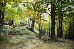forest,  autumn season. - stock photo