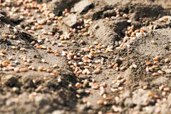 sowing wheat  . spring - stock photo