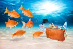 Fraud fish concept Stock Photos