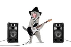 rock star cat - stock photo