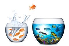 fish escape to freedom concept - stock photo