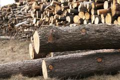 harvested wood, close-up - stock photo
