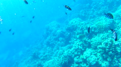 Shoals of fish near a coral reef Stock Footage