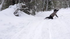 Boy falls while cross country skiing in the new snow Stock Footage