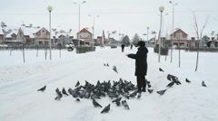Woman is feeding a flock of pigeons in the Park in winter Stock Footage