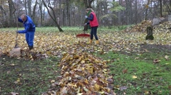 Couple in colorful clothes rake autumn leaves in garden. 4K Stock Footage