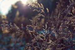 Dry plant in the sun illumination vintage style - stock photo