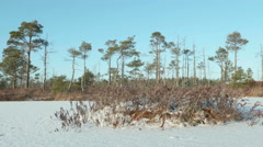 Island of the dried grass. Clean and frosty daytime. Smooth dolly shot. Stock Footage