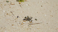 Small hermit crab in the sand Stock Footage