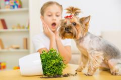 Guilty dog and broken flowerpot on the table Stock Photos