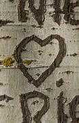 Heart engraving a Tree - stock photo