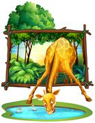 Giraffe drinking water in the jungle Stock Illustration