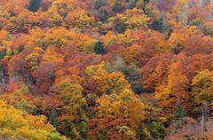Autumn fall tree and foliage background Stock Photos