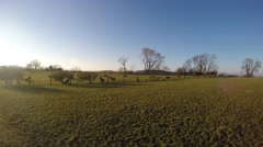 4K walking field with dogs clear autumn day - stock footage