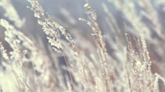Dry grass sways in the wind in winter - stock footage