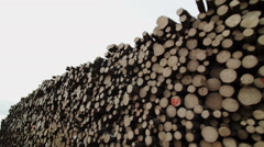 Huge Pile of Spruce and Pine Trees Stock Footage