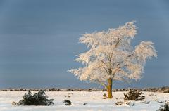 Big solitude elm tree in a winter landscape Stock Photos